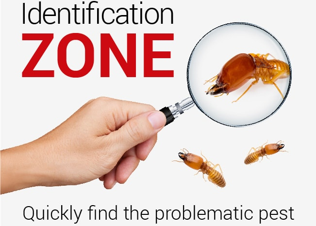 pest-identification-zone